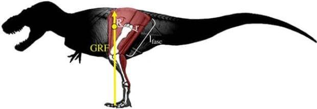 dinosaur-diagram
