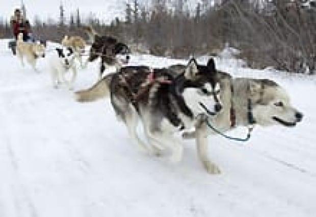cp-sled-dog-2015559