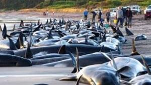 tp-whale-rescue-cp-6335151