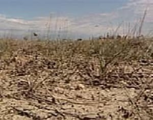 edm-dry-field