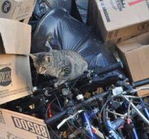 ottawa-090731-cfb-cats