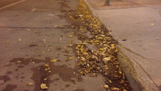 The city of Saskatoon is sweeping streets of leaves for the first time in two decades, but enthusiastic residents have taken to raking their leaves onto the street, causing some delays.