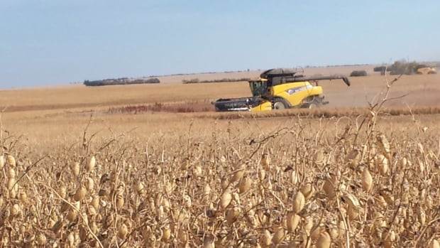 Harvest 2013 in Saskatchewan