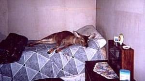 bc-090810-pet-deer4