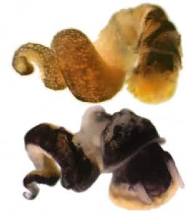 tech-090723-new-zealand-snail