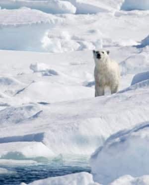 polar-baffin-cp-5212374