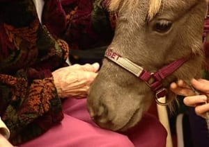 pe-full-senior-hand-horse