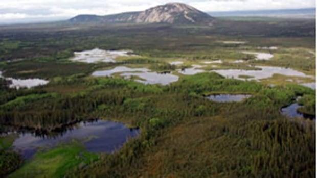 tp-nwt-wetlands-boreal