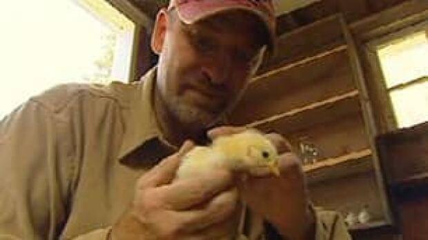 cgy-paul-hughes-chicken