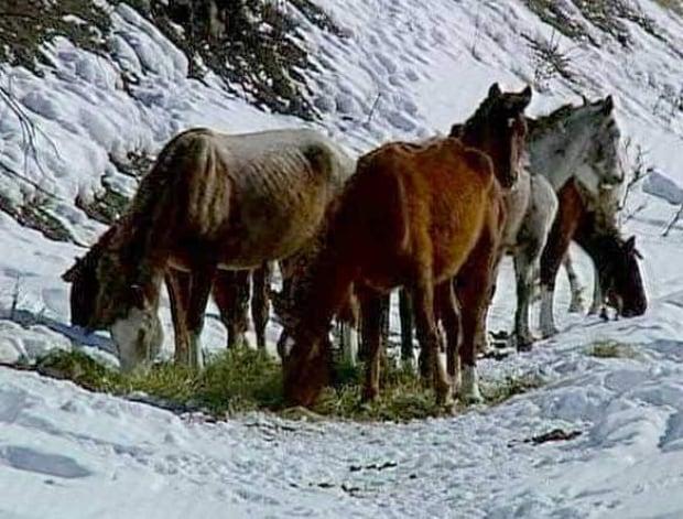 bc-090311-dead-horses5-FULL
