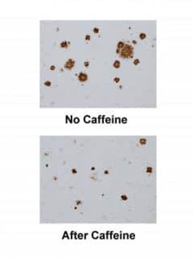 caffeine-mice