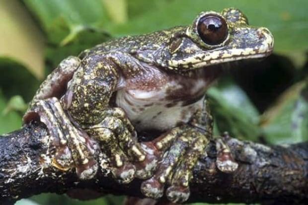 rabbs-tree-frog-cp-7591902