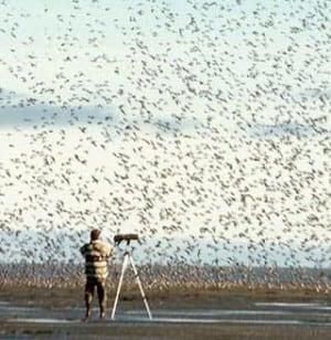 bird-migration-cp-922887