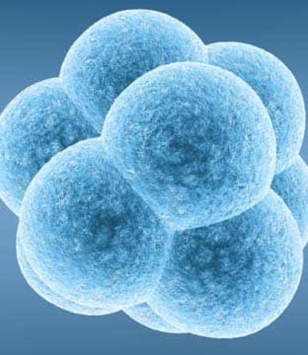 embryo-istock-3049166-312