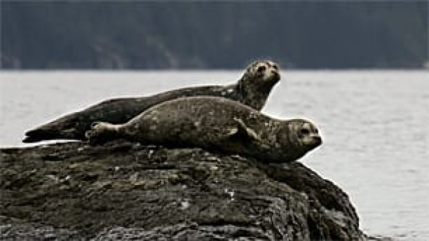 bc-090902-harbour-seals