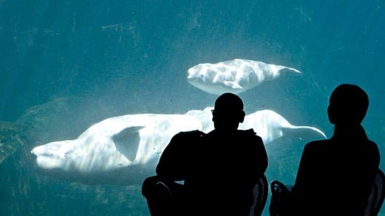 bc-090605-qila-pregnancy-vancouver-aquarium