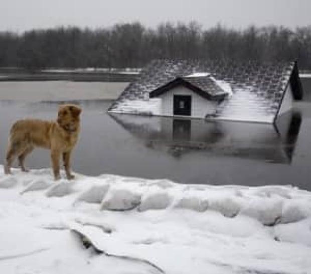 elsie-flood-cp-6464095