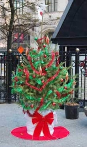 potted xmas tree - Christmas Tree Rental