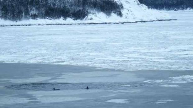 nl-dolphin-bay-200902