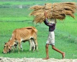 indiafarm-cp-5100750