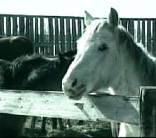 deadhorses080309