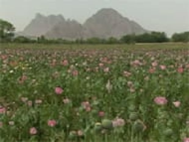 ot-afghanistan-poppy-fields