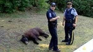bc-080808-bear6