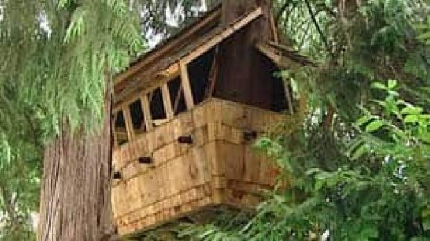 bc-080718-treehouse1
