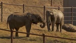 toronto-elephants-california