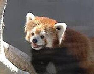 edm-panda