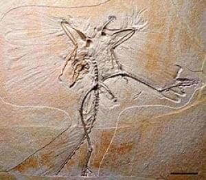archaeopteryx-cp-250-283379
