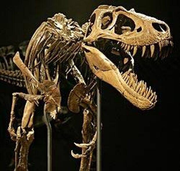 rex-dino-cp-250-164695