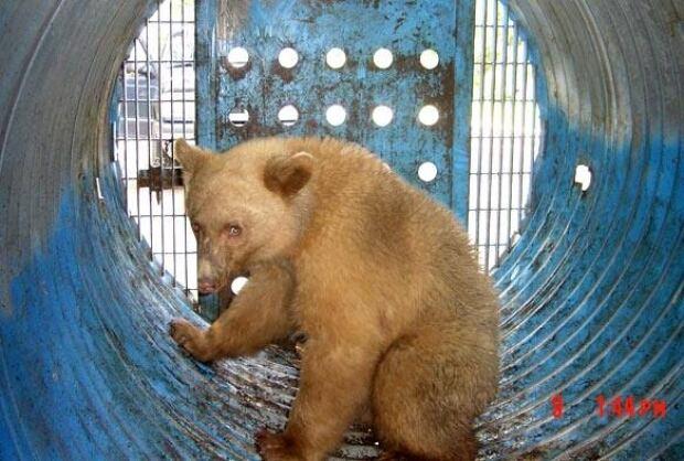 bc-081029-spirit-bear-FULL