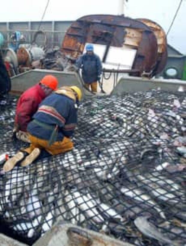 trawlercatch-080703
