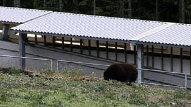 bc-081022-bear-ioc1