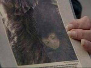 monkey_poster