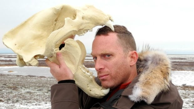 Author Robin Esrock with Polar bear skull. Polar bears in Churchill Manitoba are the #1 Manitoba attraction in the Great Canadian Bucket list book.