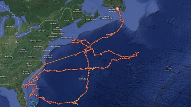 The travelling path of Lydia, the great white shark, places her in Placentia Bay.