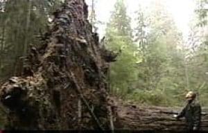 stanley-park-uproot061220