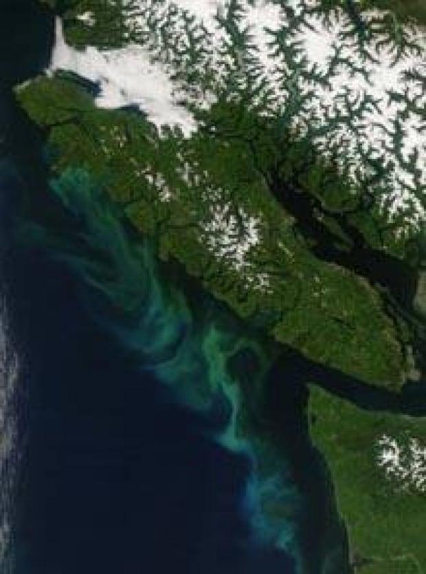 bc-coast-plankton-nasa