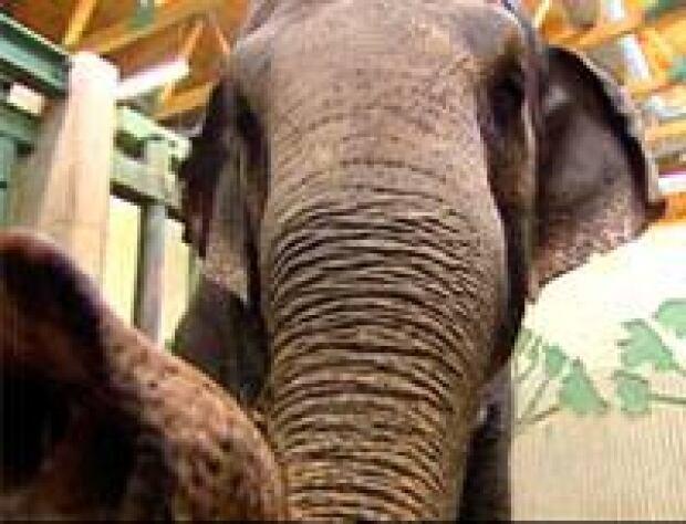 ab-elephants