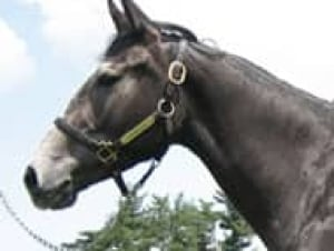 twilight-cp-horse-070207