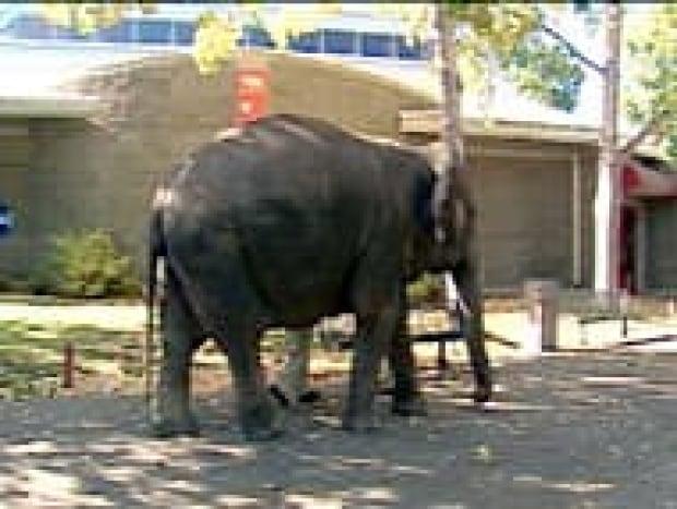 edm-samantha-elephant