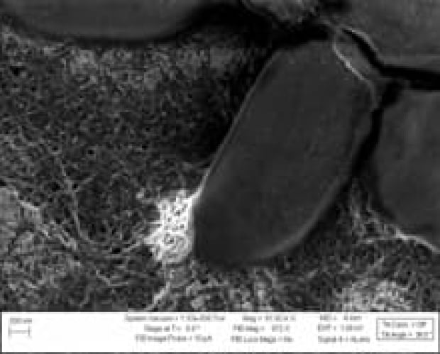 bateria-nanotubes2