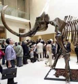 mammoth-france_cp_12001050