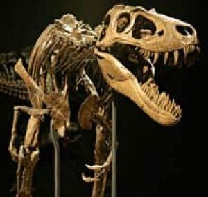 jane-dinosaur-cp-8117049