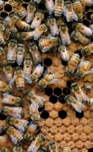 bees-cp-10858472