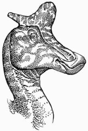 lambeosaurus_060124