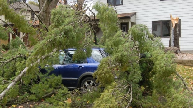 A tree toppled by high winds in the Manor Park district of Ottawa. Strong winds caused damage and knocked out power in parts of Ontario, Quebec and other eastern provinces Friday. A woman in Port Colborne, Ont., died after a tree fell on her car as she was driving by.