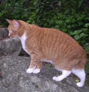 jackthecat-cp-1499158
